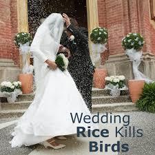 wedding rice wedding rice kills birds don t believe that