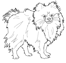 dog and puppy coloring pages pomeranian dog coloring page free printable coloring pages