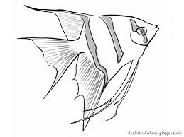 realistic sea animal coloring pages