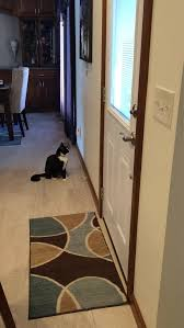 How To Go Blind This Is How My Blind Cat Asks To Go Outside Imgur