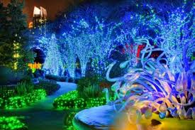 zoo lights memphis 2017 the week ahead thanksgiving edition