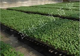 Nursery Plant Supplies by 6pcs Lot 200 Hole Nursery Pot Plant Plastic Seedling Tray Garden