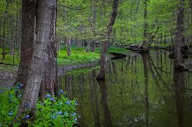 Manueldiazphotography photo keywords messenger woods forest preserve