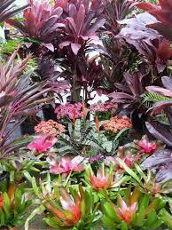 Tropical Rainforest Plant Species List - tropical plants