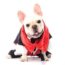 english bulldog halloween costumes amazon com dogloveit halloween vampire costumes soft dog clothes