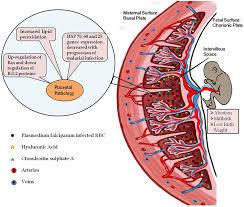 frontiers in medicine infectious diseases u2013 surveillance