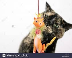 christmas cat stock photos u0026 christmas cat stock images alamy