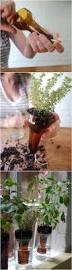 Indoor Kitchen Garden Ideas Best 25 Bottle Garden Ideas On Pinterest Plants In Bottles