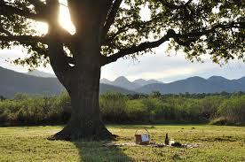 file platbos reserve oak tree picnic jpg wikimedia commons