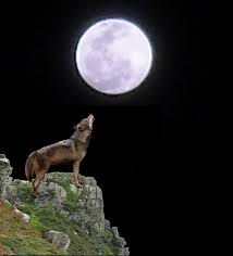 wolf howling at moon by sky1213 on deviantart