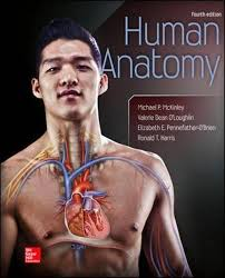 Hole Anatomy And Physiology 13th Edition Mcgraw Hill Education Holes Essentials Of H Stream Anatomy And
