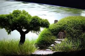 Most Beautiful Aquascapes Top 10 Best Examples Of Aquascaping