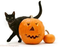black smoke cat rubbing past halloween pumpkin white background