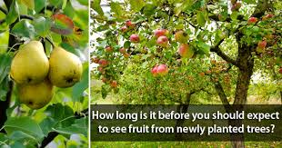 in how many days my tree will give fruit nurserylive