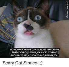 Scared Cat Meme - no horror movie can surpass the creepy sensation of seeing your cat