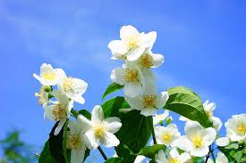 the best perennial climbing plants dreamley