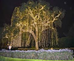 Lights In Houston Cool Christmas Lights Best Images Collections Hd For Gadget