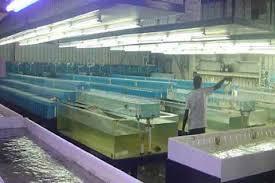 the asian aqua farm home