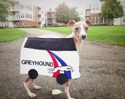 Italian Halloween Costume Greyhound Costumes Etsy