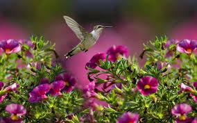 2560x1600 desktop wallpaper for hummingbird download awesome