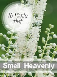 Best Fragrant Indoor Plants - 10 plants that smell heavenly plants yards and gardens