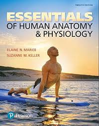 Anatomy And Physiology Pdf Books Human Anatomy U0026 Physiology 10th Edition Pdf Download E Books