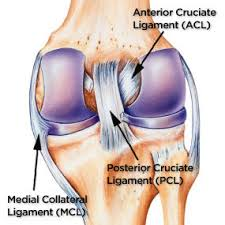 Anatomy Of Knee Injuries Discover 5 Common Causes Of Severe Knee Pain