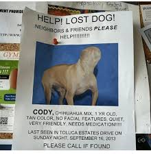 Lost Dog Meme - ment provide helpi lost dog neighbors friends please 340 ttp