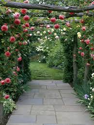 Arbors And Trellises Types Of Fragrant Climbing Plants Hgtv
