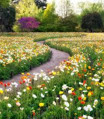 flower places beautiful flower landscapes japan dose