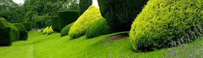 Green Thumb Landscaping by Green Thumb Landscaping San Rafael Ca Ca Us 94913
