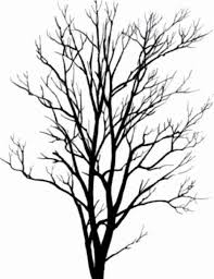 cedar tree silhouette free download clip art free clip art