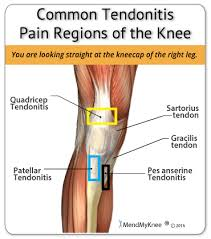 Anatomy Of Knee Injuries Heal Your Knee Injury And Avoid Re Injuring Your Knee Joint With