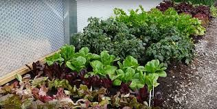 Garden Layouts For Vegetables Practical Vegetable Garden Layout Tips And Ideas