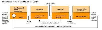 Pathway Of Light Through The Eye Human Eye Definition Structure U0026 Function Britannica Com