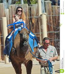 a camel ride at the reid park zoo editorial stock image image