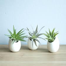 mini ivory ceramic hanging planter with flat bottom