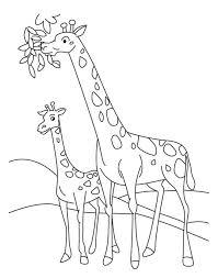 printable baby giraffe coloring coloringpagebook