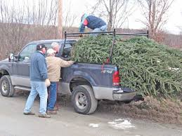 Christmas Tree Pick Up Killingtonblog Com Killington Vermont Christmas Tree Day At