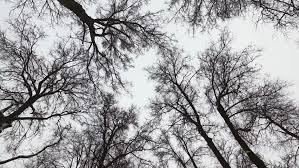 trees without leaves in the winter park stock footage
