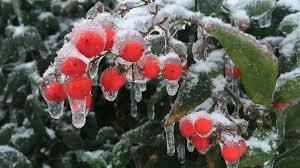 Farmers Almanac Florida Get Ready Farmers Almanac Predicts Long Cold Winter Abc11 Com