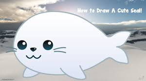 how to draw a cute seal youtube