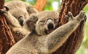 bartender resume template australia mapa koala sewing chair brisbane nightlife