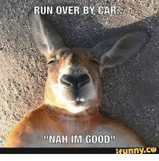 Funny Deer Memes - 25 best memes about furry deer furry deer memes