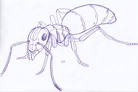 may 3rd ants sketchdaily