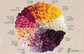 calla colors calla flower colors calla color wheel calla lilies
