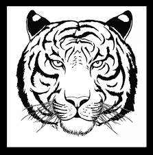 tiger face line drawing black and white vector line drawings of