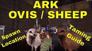 ark ovis sheep taming guide how to find a ovis sheep shh