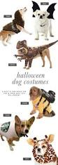 the most popular dog costumes popsugar pets get 20 dog halloween ideas on pinterest without signing up dog