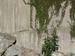 download wall climbing vines michigan home design